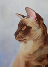 Cats and Kittens in Acrylics - comprar online