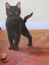 Cats and Kittens in Acrylics en internet