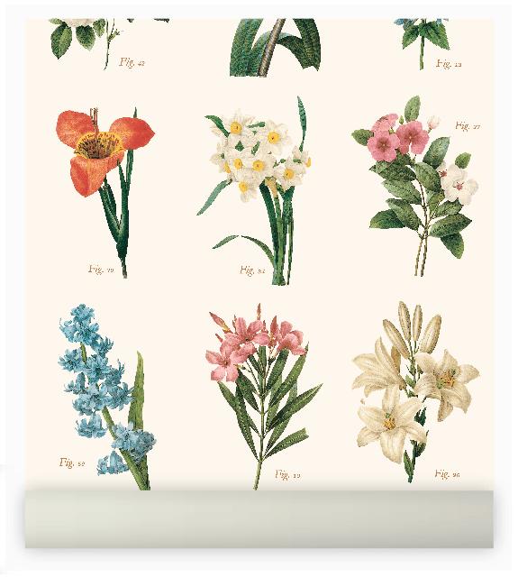 botanica - Comprar en enamoradadelmuro