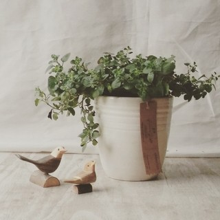 Suculenta en maceta de vidrio comprar en greengift Macetas ceramica online
