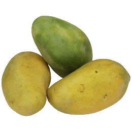 Manga Mangifera indica Anacardiaceae Fruta de Quintal da Amazônia ...