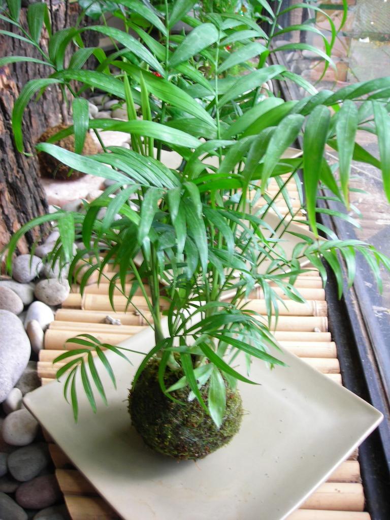 Kokedamas comprar en vivero online for Vivero plantas online