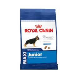 royal canin maxi junior comprar en indigo pets shop. Black Bedroom Furniture Sets. Home Design Ideas