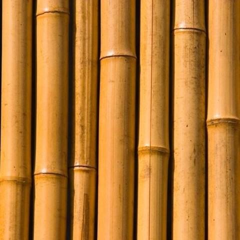 Bambuguazu - Bambu seco para decoracion ...