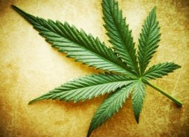 Se encuentran tres kilos de marihuana en la casa de Peralta