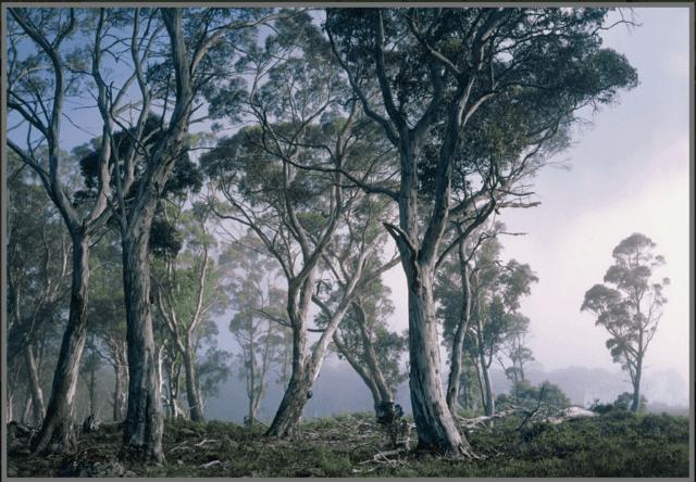 Fotomural komar - Fotomurales national geographic ...