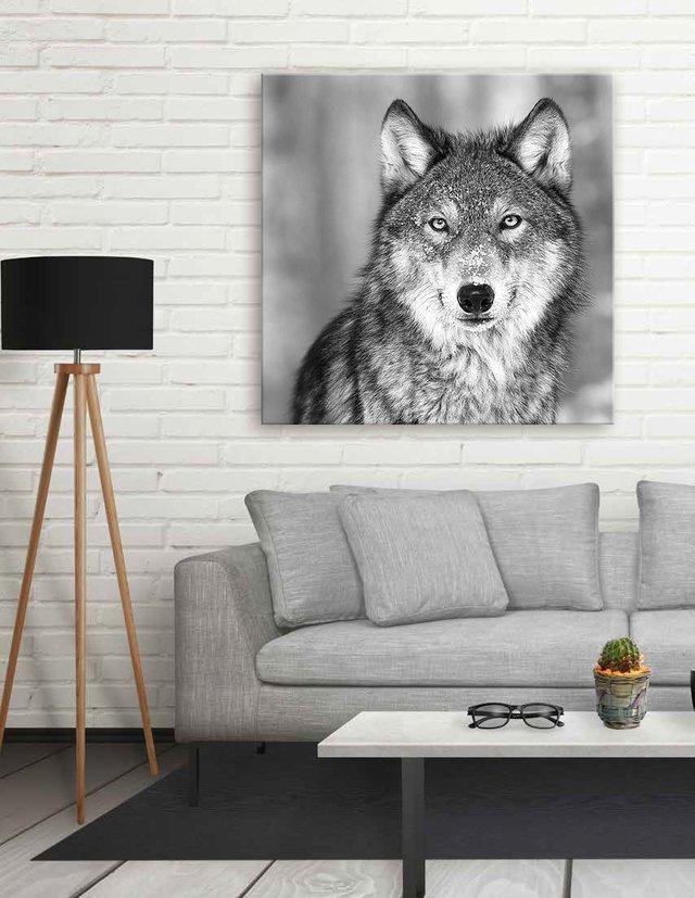 Lobo - Cuadro enmarcado o de lienzo (bastidor de tela)