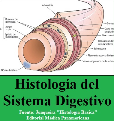 HISTOLOGIA DEL SISTEMA DIGESTIVO - Junqueira - Histologia Basica
