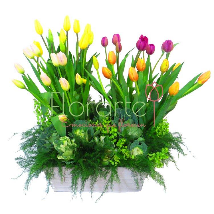 Florerias m xico - Jardines de tulipanes en holanda ...