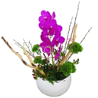 Arreglo de Orquídeas Vanda Pekin