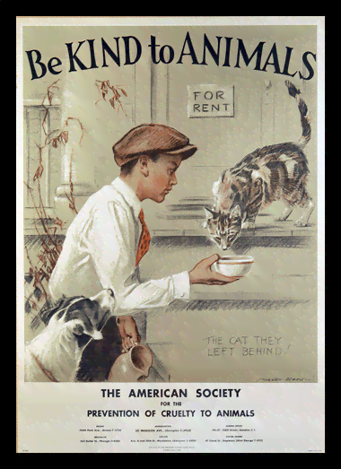 Quadro Poster Propaganda Be Kind to Animals Boy