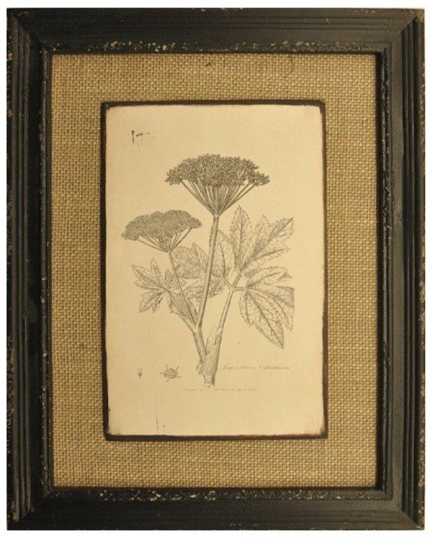 Marco de madera con arpillera con imagenes de plantas - Marcos para plantas ...