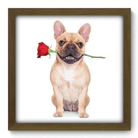 Quadro Decorativo - Dog - 030qdom