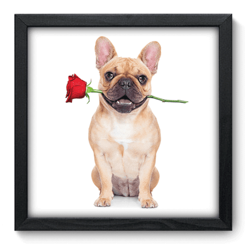 Quadro Decorativo - Dog - 030qdop