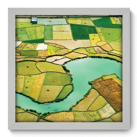 Quadro Decorativo - Campos de Arroz - 033qdpb
