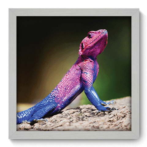 Quadro Decorativo - Lizard - 118qdsb