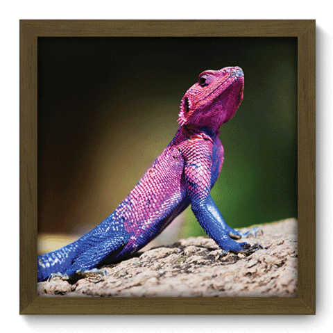 Quadro Decorativo - Lizard - 118qdsm