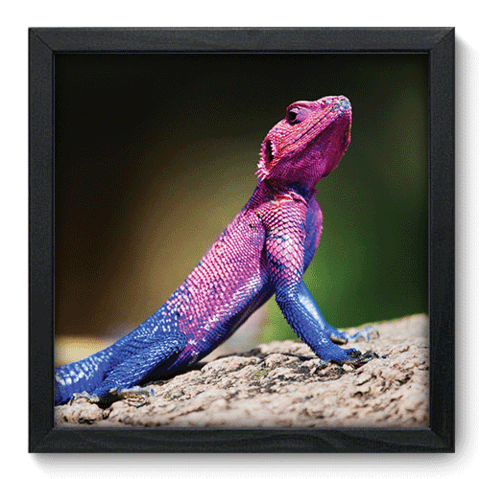 Quadro Decorativo - Lizard - 118qdsp