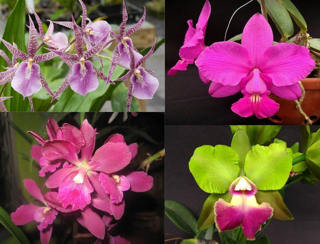 Kit 4 Orquídeas5