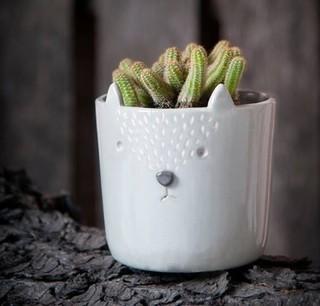 comprar macetas de cermica en bosque filtrado por productos destacados