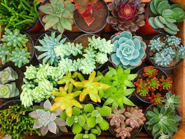 Suculentas x caj n comprar en vivero raiz for Decoracion con plantas crasas