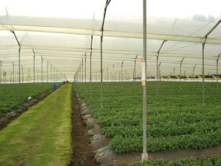 Fabrica de plastico invernadero