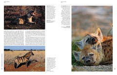 Handbook of the Mammals of the World - Volume 1 Carnivores - tienda online