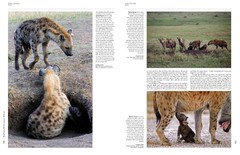 Handbook of the Mammals of the World - Volume 1 Carnivores - La Biblioteca del Naturalista