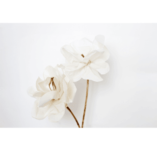 Luxury Paper Flower Magnolia - Luxury Scents