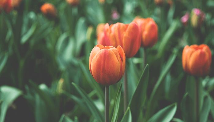 Flores online en Tiendanube