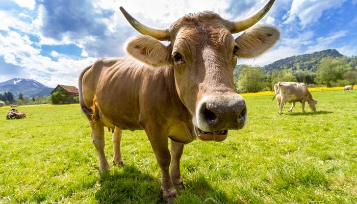 Que tipo de produto é o seu: estrela, vaca leiteira ou abacaxi?