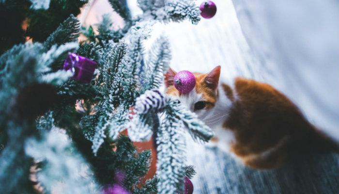 Gato em árvore de Natal