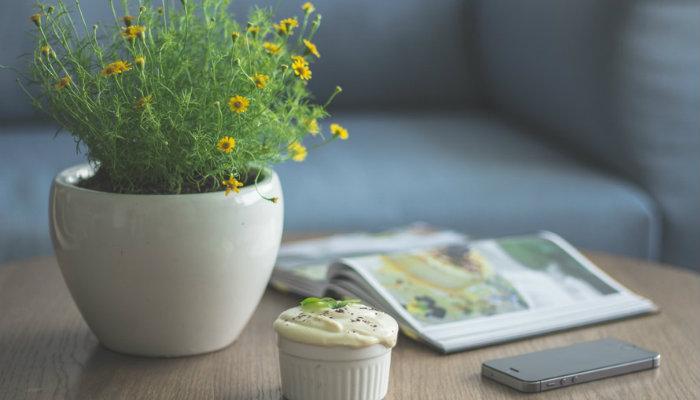 Mesa com planta, revista, bolinho e celular