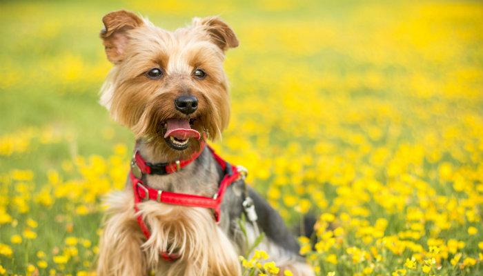 Conheça a Simple Dog: comida natural para cachorros