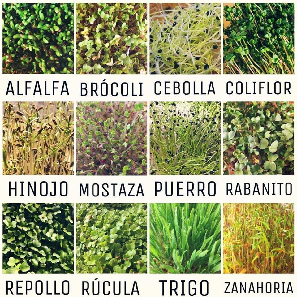 Semillas De Zanahoria Organicas Para Germinar Tierras de cultivo ecológico y biodinámico. semillas de zanahoria organicas para