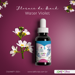Floral de Bach - Water Violet 30 ml na internet
