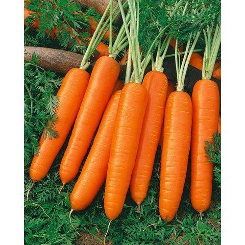 Zanahoria Nantesa – Estas zanahorias tienen forma cilíndrica, recta y lisa.