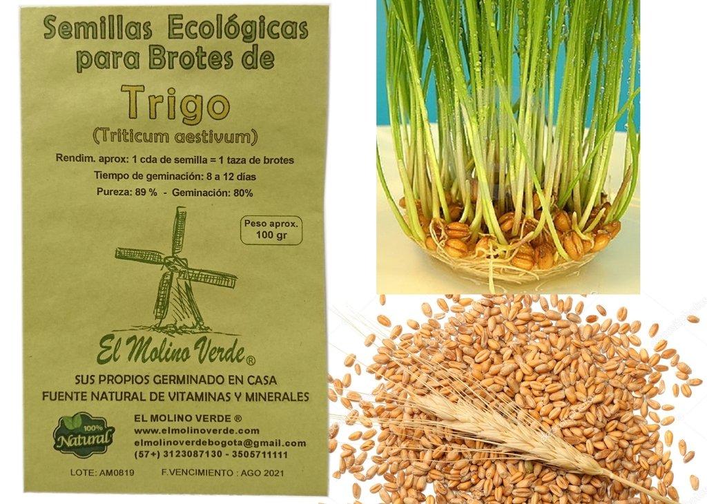 Semilla De Hierba Para Gato-Gato de hierba de trigo orgánico espelta por mi hierba para gato