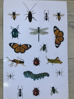 Stickers insectos