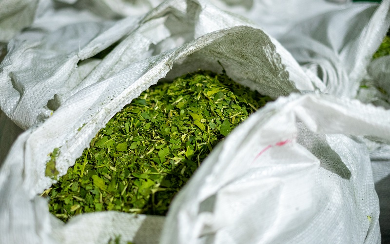 yerba mate in bags