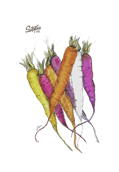 Semillas de Zanahorias de colores mix