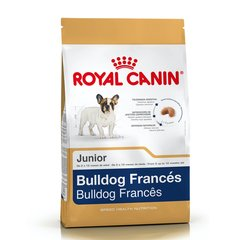 RY BULLDOG FRANCES JUNIOR
