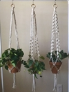 Kit 3 Hang Plants Artemísia