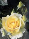 Painting Watercolour Flowers From Photographs - comprar online