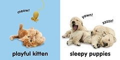 Baby Touch and Feel: Puppies and Kittens - comprar online