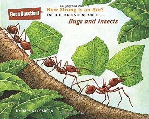 How Strong Is an Ant?: And Other Questions About... Bugs and Insects