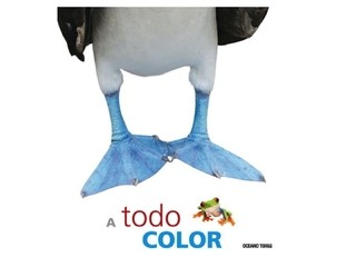 Libro A Todo Color