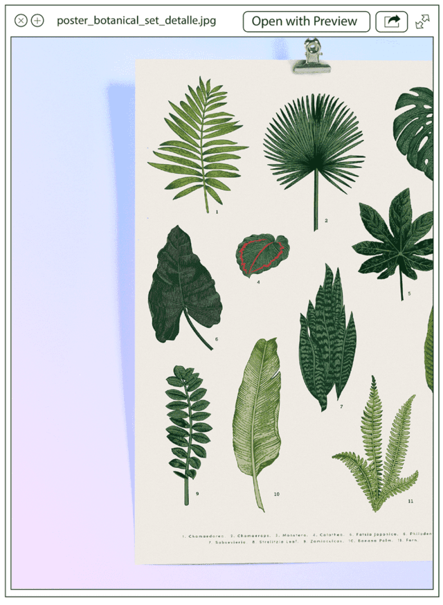 Poster Botanical Set en internet
