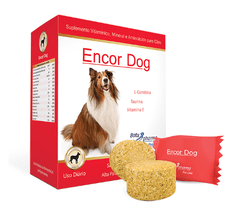 Encor Dog