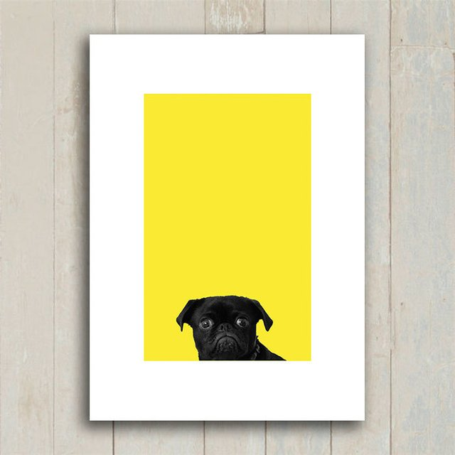 Poster Black Pug - Yellow